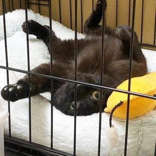 「猫捨て場」から来ました・竹二郎