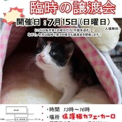 緊急!!臨時の猫の譲渡会