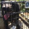 大型犬の青葉ちゃん サムネイル5
