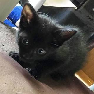 黒猫のあやめ里親募集中