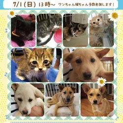 夏休み前☆ワンちゃん猫ちゃん譲渡会!!