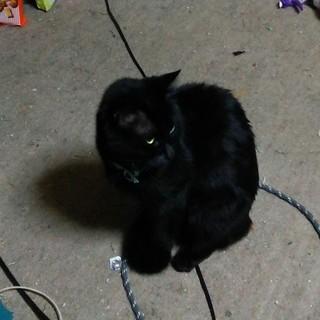 黒猫の神田ちゃん ツンデレ