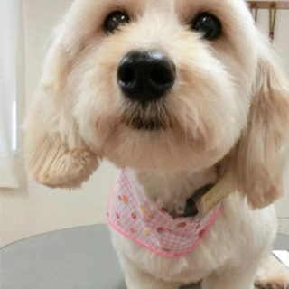 只今お見合い中、募集は一時中止です:大分:小型犬