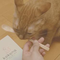 うちの猫たちとkokona(体質改善サプリメント)