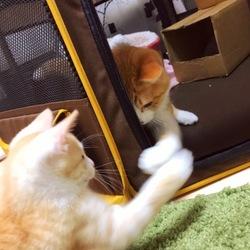 トライアル4日目~若さの違い~