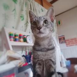 里親募集中!保護猫ちゃん。