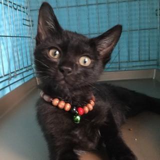 可愛い黒猫です♪