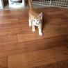 元気いっぱい仔猫!
