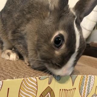 ミニウサギ 1歳7ヶ月