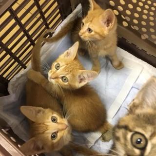住宅街に置き去りにされた子猫6匹