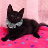 なれなれ黒子猫☆ナノくん 2ヵ月弱  サムネイル2
