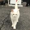 人懐こい白猫