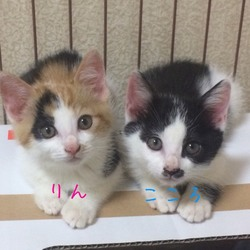 6月も沢山の子猫ちゃん保護