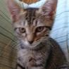 野良子猫保護してます。うーちゃん