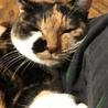 寝顔がとっても可愛いスリゴロ三毛猫ちゃんです! サムネイル2