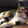 寝顔がとっても可愛いスリゴロ三毛猫ちゃんです!