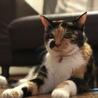 寝顔がとっても可愛いスリゴロ三毛猫ちゃんです! サムネイル3