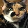寝顔がとっても可愛いスリゴロ三毛猫ちゃんです! サムネイル5