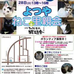 7月7日(土) 地域猫から社会猫へ FIPフリー 四谷猫廼舎 里親会(ボランティア募集中)