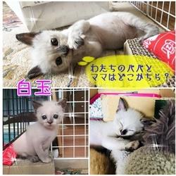 三重県名張市 猫の譲渡会
