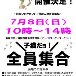 Bootymarket × [sakuraneko] 子猫譲渡会