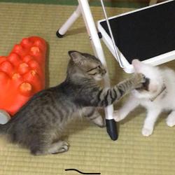 子猫、社会性を学ぶ