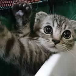 三重県津市 7月8日(日)ほんわか猫な日々子猫の譲渡会