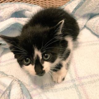 白黒の子猫!