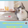 猫の譲渡会、開催【NPO法人 府中猫の会】