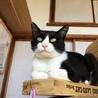 人も猫も大好き!社交的な白黒・ヤマト君 サムネイル3