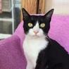 人も猫も大好き!社交的な白黒・ヤマト君 サムネイル5