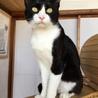 人も猫も大好き!社交的な白黒・ヤマト君 サムネイル6