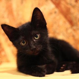 【ホット】何でも一生懸命!黒ネコ女子♪