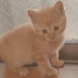 窓枠を歩くうちの茶トラ猫です