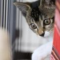 保護猫マイです。遊ぶ姿が可愛い美猫ちゃん!