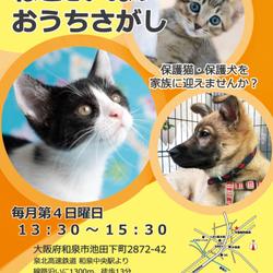 第1回☆ねこといぬのおうちさがし@和泉市・今岡動物病院