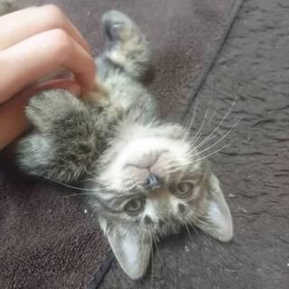元気な子猫です!