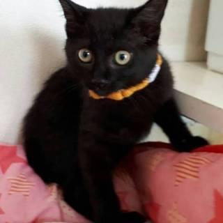 3ヶ月位 メス 可愛い黒猫モナリちゃん