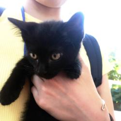猫の譲渡会 名古屋市守山区 みなと猫の会