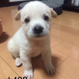 ☆408  1.1キロ 赤ちゃんわんこ