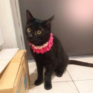 ハンディ甘えた黒猫☆マルコちゃん 8ヵ月