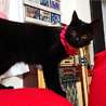ハンディ甘えた黒猫☆マルコちゃん 8ヵ月 サムネイル2