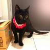 ハンディ甘えた黒猫☆マルコちゃん 8ヵ月 サムネイル3