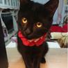 ハンディ甘えた黒猫☆マルコちゃん 8ヵ月 サムネイル4