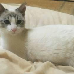 猫の里親会 名古屋市緑区徳重 中部ケーブルネットワーク東名局 サムネイル2