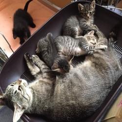 保護した猫が、FIV陽性。先住猫と一緒にして良い?