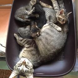 保護した猫が、FIV陽性。先住猫と一緒にして良い?サムネイル