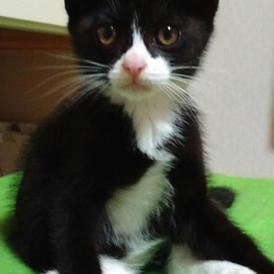 猫の里親会 名古屋市緑区徳重 中部ケーブルネットワーク東名局