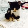 袖猫パトロール隊(保護活動者)