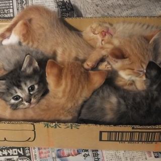 5月23日生れ、生後1か月半5匹の人懐こい子猫!